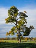 Jesień ranek Zdjęcie Royalty Free