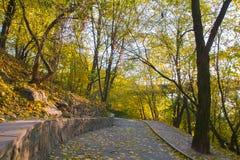 Jesień ranek przy parkiem Zdjęcie Royalty Free