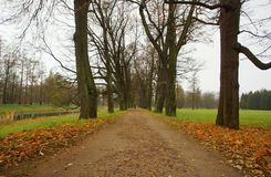 Jesień ranek w Catherine parku Fotografia Stock