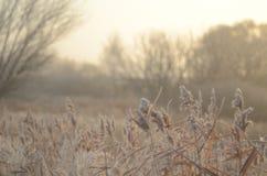 Jesień ranek w mgle obraz royalty free