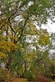 jesień Regina Zdjęcia Stock