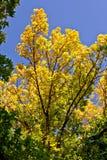 jesień Regina Zdjęcie Royalty Free