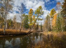 Jesień Rzeczny Olha w Wschodnim Syberia Obrazy Royalty Free