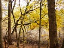 Jesień scena upadek zostaw drzewa zdjęcie royalty free