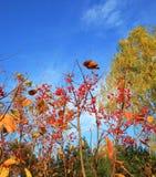 jesień sceneria Obraz Stock