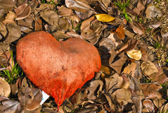 jesień serce Zdjęcia Stock