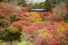 Jesień sezon przy Tofukuji, Kyoto Fotografia Royalty Free