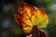 Jesień skarb Fotografia Stock