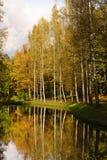 jesień spadek las Fotografia Royalty Free