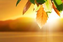 jesień spadek liść Fotografia Royalty Free