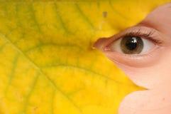 jesień spojrzenie Fotografia Royalty Free