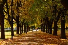 Jesień sposób, Vigeland park Zdjęcie Stock
