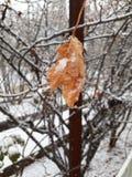 jesień spotyka zima obraz stock