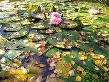 Jesień staw Zdjęcie Stock