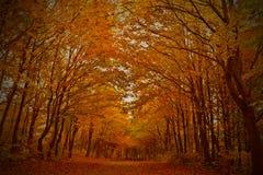 jesień Sweden Zdjęcie Stock