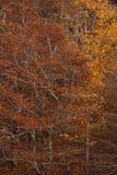 jesień szczyt Obrazy Royalty Free