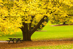 jesień Tasmania Zdjęcia Stock