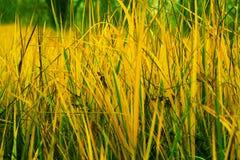jesień trawa Fotografia Stock