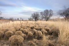 jesień trawa Obraz Royalty Free