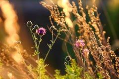 jesień trawy trzony Fotografia Royalty Free