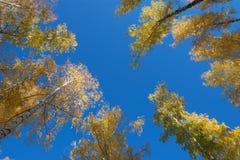 jesień ulistnienie Zdjęcie Royalty Free
