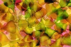 jesień ulistnienie Zdjęcia Stock