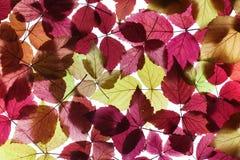 jesień ulistnienie Obraz Royalty Free