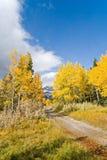 jesień upadek kolorów, Obraz Stock