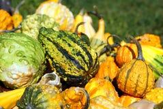 jesień uprawy Obraz Royalty Free