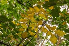 Jesień urlop Obrazy Royalty Free