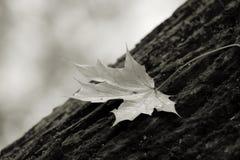 Jesień urlop Obrazy Stock