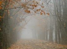 Jesień Vista Obrazy Stock
