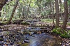 Jesień w Allegheny górach Zdjęcie Stock