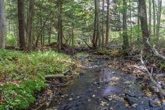 Jesień w Allegheny górach Zdjęcia Royalty Free