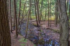 Jesień w Allegheny górach Zdjęcie Royalty Free