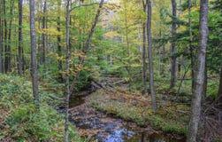 Jesień w Allegheny górach Obraz Royalty Free