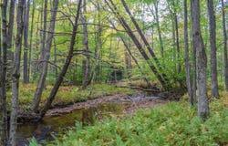 Jesień w Allegheny górach Obraz Stock