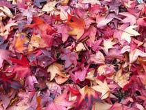 Jesień w colores Zdjęcie Stock