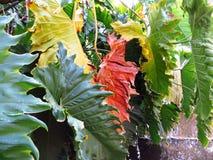Jesień w colores Fotografia Stock