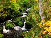 Jesień w czarnym lesie Zdjęcia Royalty Free