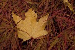 Jesień w deszczu Fotografia Stock