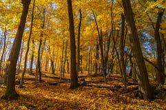 Jesień w drewnach Fotografia Royalty Free