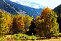 Jesień w górach z kolorowym lasem, Almaty, Kazachstan Fotografia Stock