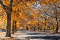 Jesień w górze Macedon fotografia royalty free