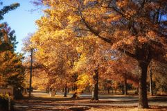 Jesień w górze Macedon Fotografia Stock