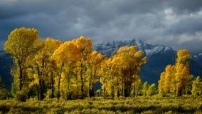 Jesień w Gros Ventre rzeki dolinie Obrazy Royalty Free
