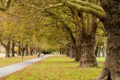 Jesień w Hagley Parku, Christchurch, Nowa Zelandia Obraz Stock