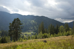 Jesień w halnym lesie Zdjęcia Stock