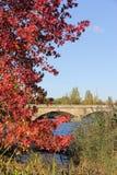 Jesień w Hyde parku, Londyn Obrazy Stock