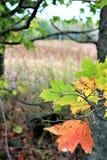 Jesień w kraju zdjęcia stock